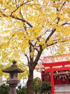 紅葉桜と金生稲荷神社