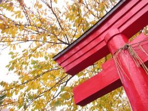 紅葉桜と金生稲荷神社鳥居