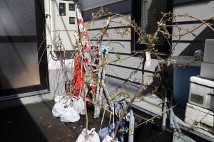 境内枝垂れ桜植樹